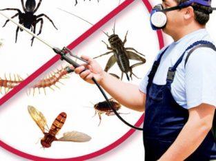 دليل الكويت لشركات مكافحة حشرات المنزل